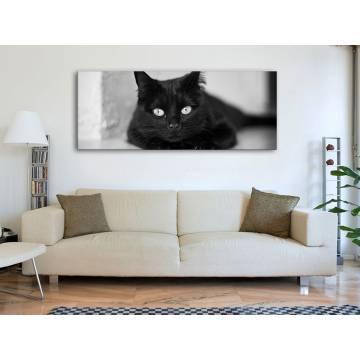 Cateye black & white - macska szemek fekete fehér vakrámára feszített vászonkép 100188