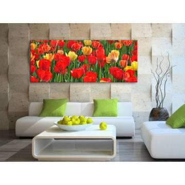 Tulips wonder - tulipánok - vászonkép 100215