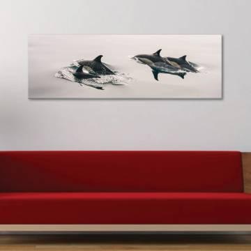 Happy dolphins - delfinek - vászonkép
