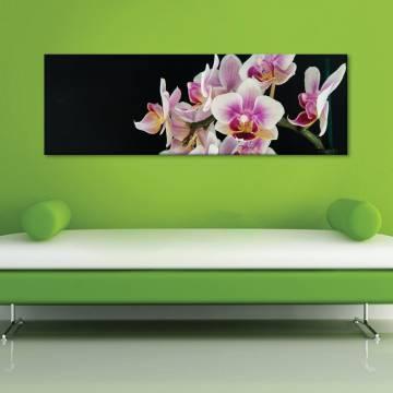 Gracefull orchids - kecses orchideák - vászonkép
