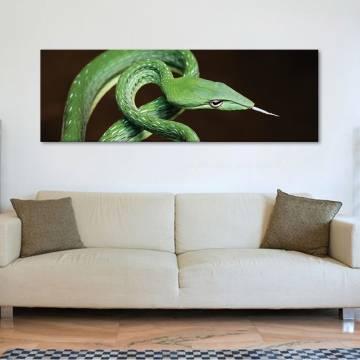 Green danger - zöld veszély - vászonkép