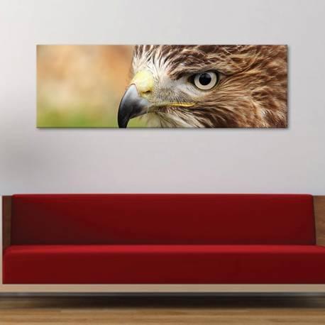 Eagle eye - sas szem - vászonkép
