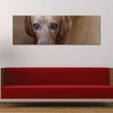 Doggie - kutyus - vászonkép