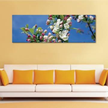 Cherry tree in bloom - virágzás - vászonkép