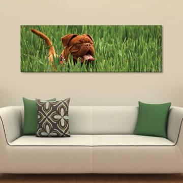 Happy doggie - vászonkép