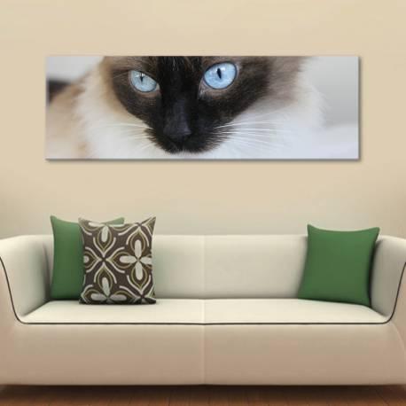 Blue cateyes - kék szemek - vászonkép