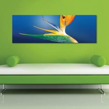 Colorful - vászonkép