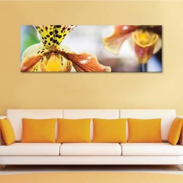 Spots - virág - vászonkép