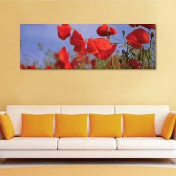 Beautyful poppies - pipacsok - vászonkép