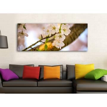 Sherry blossom - a cseresznye virágzása vászonkép 100244