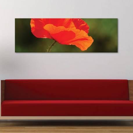 Poppy - pipacs vászonkép