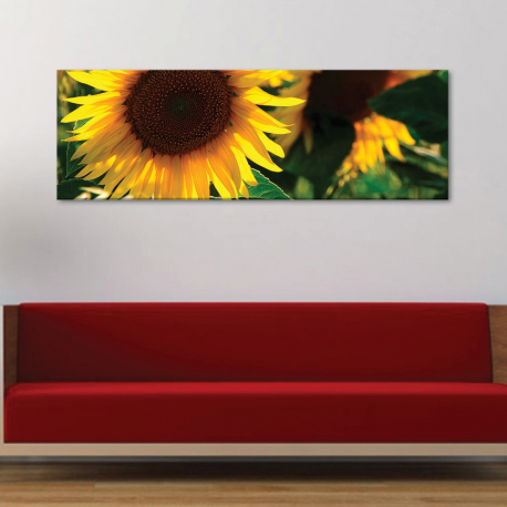 Turn sunflower - napraforgó vászonkép
