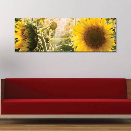Sunflowers - Napraforgó vászonkép