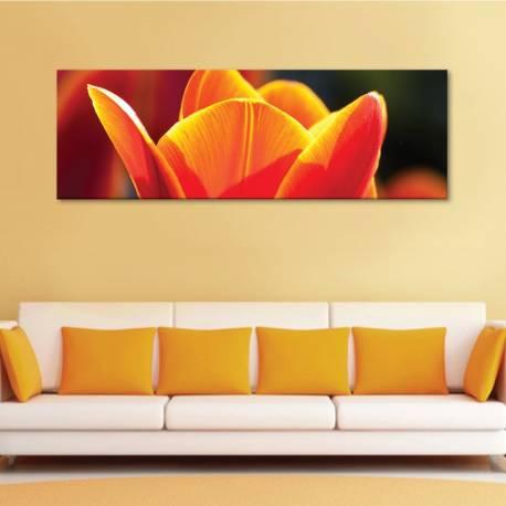 Open tulip - Nyíladozó tulipán vászonkép