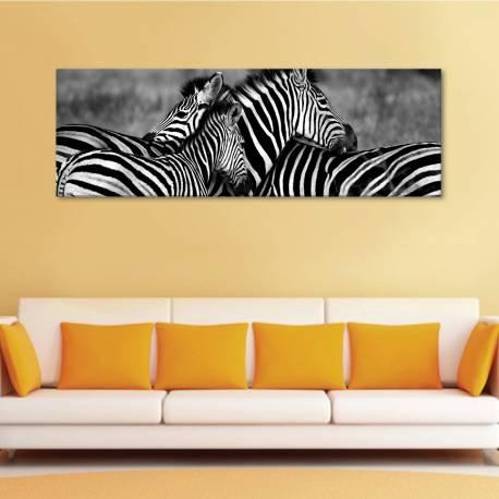 Zebra family - zebra család vászonkép
