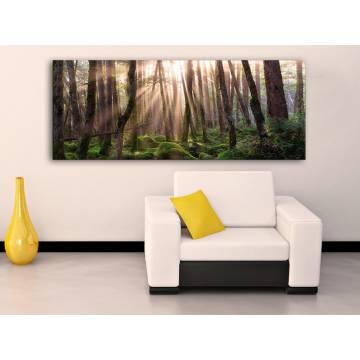 Forest sunshine - erdei fények vászonkép 100282
