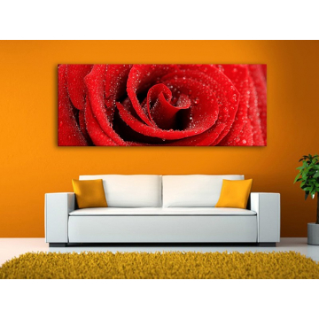 Red rose with drops - vörös rózsa vízcseppekkel - vászonkép 100291