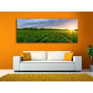 Sunshie meadow - napsütéses rét vászonkép 100303