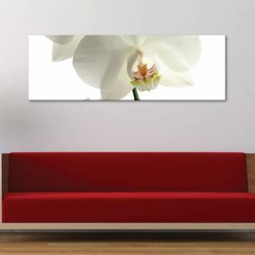 White orchid - fehér orchidea - vászonkép