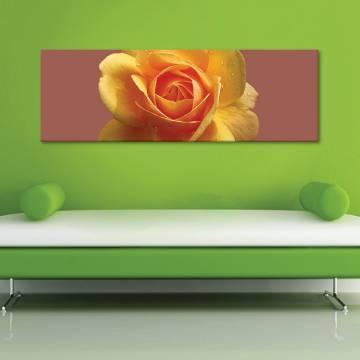 Rose and drops - Rózsa és vízcseppek - vászonkép