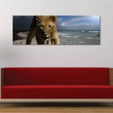 Young lion - ifjú oroszlán - vászonkép
