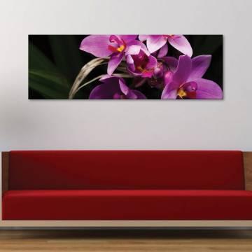 Orchids living - vászonkép