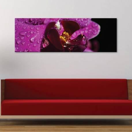 Orchids & drops - orchidea és vízcsepp - vászonkép