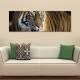 The tiger - tigris - vászonkép