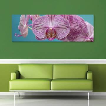Orchid flower - orchidea - vászonkép