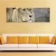 The Lion's eyes - az oroszlán szemei - vászonkép