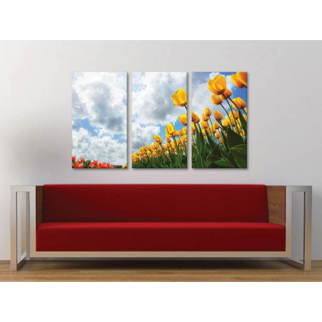 Három részes vászonkép - Look at the sky - tulipán vászonkép 3a-100223