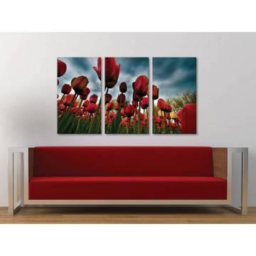 Három részes vászonkép - Tulips waiting the storm - tulipánok vihar elõtt vászonkép 3a-100226