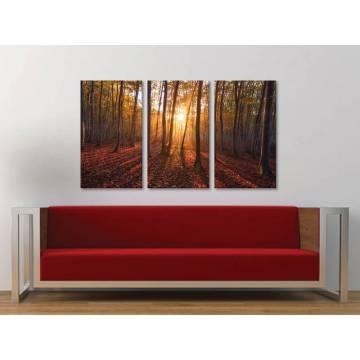 Három részes vászonkép - Shining through the trees - fák és fények vászonkép 3a-100344