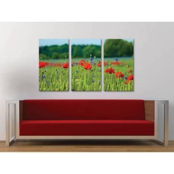 Három részes vászonkép - Blue and red are friends - kék és piros virágok 3a-100349