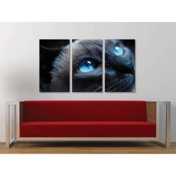 Három részes vászonkép - Blue Cateyes - Kék Macskaszemek - vászonkép 3a-100494