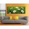 Camomile meadow - kamilla virág mező - no. 100162