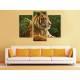 Három részes vászonkép - Respect the tiger - tigris vászonkép 3a-100391 - 2