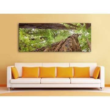 Forest giants - erdei óriás fák - vakrámára feszített vászonkép 100217