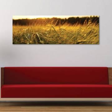 Wheat in sunset búzamezõ - vászonkép