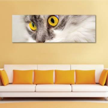 Yellow - macskás - vászonkép