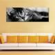 Cat in b&w - fekete fehér macska - vászonkép - 1