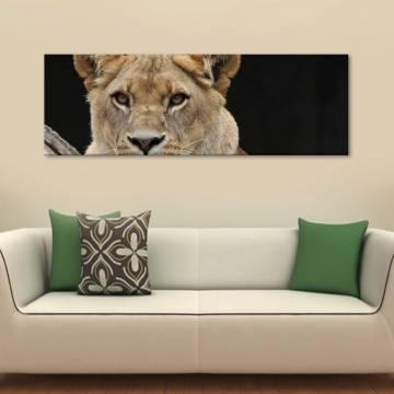 Lion - oroszlán vászonkép