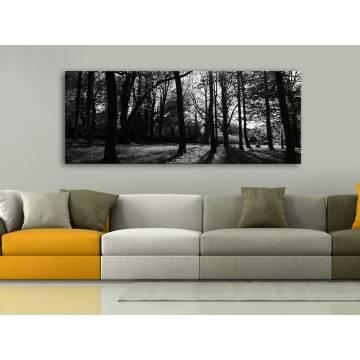 Forest lights black & white - erdei fények fekete-fehér vászonkép 100245