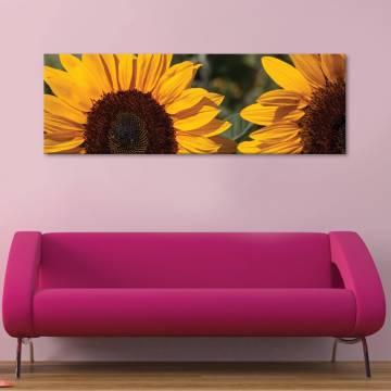 Sunflower crop - napraforgó termés vászonkép
