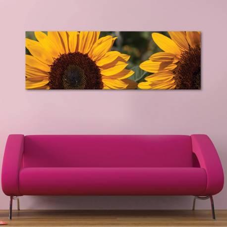 Sunflower crop - napraforgó termés vászonkép - 1
