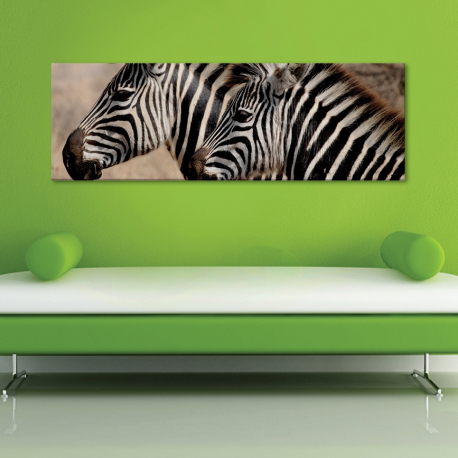 Zebra friendship - zebra barátság vászonkép