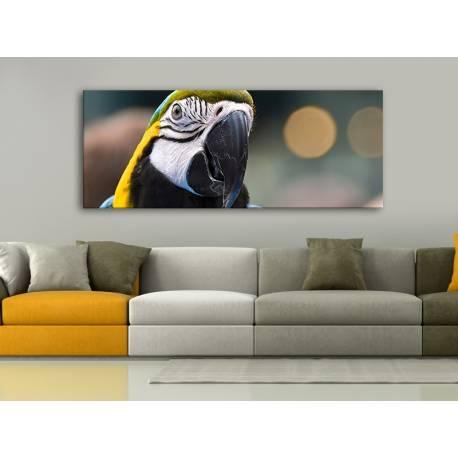 Parrot colors - színes papagáj vászonkép 100278