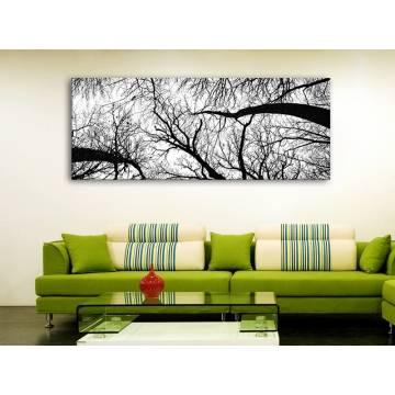 Grove black & white - liget - fekete-fehér vászonkép 100279