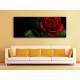 Black & Red - vörös rózsa vászonkép 100298