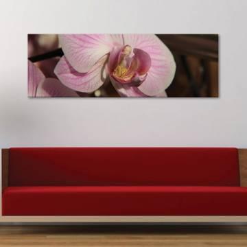 Macro orchid - orchidea - vászonkép